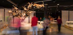 Musée des Sciences Naturelles - Artfood Traiteur